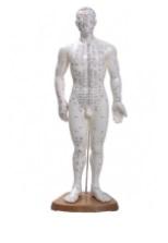 Modelo Masculino 50cm